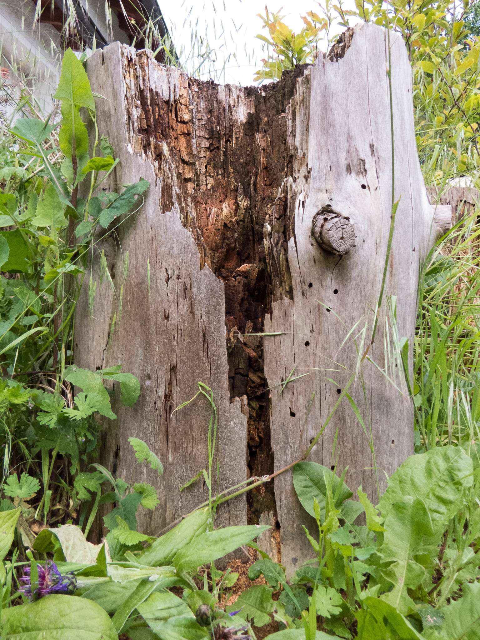 Schlechtes Wetter bedeutet Fastenzeit für Camponotus vagus