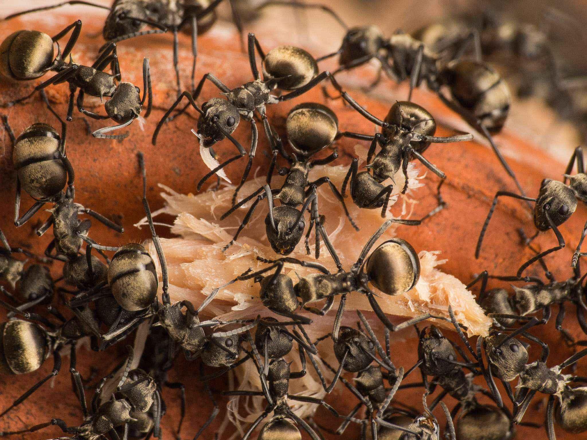 Ameisen und der Thunfisch