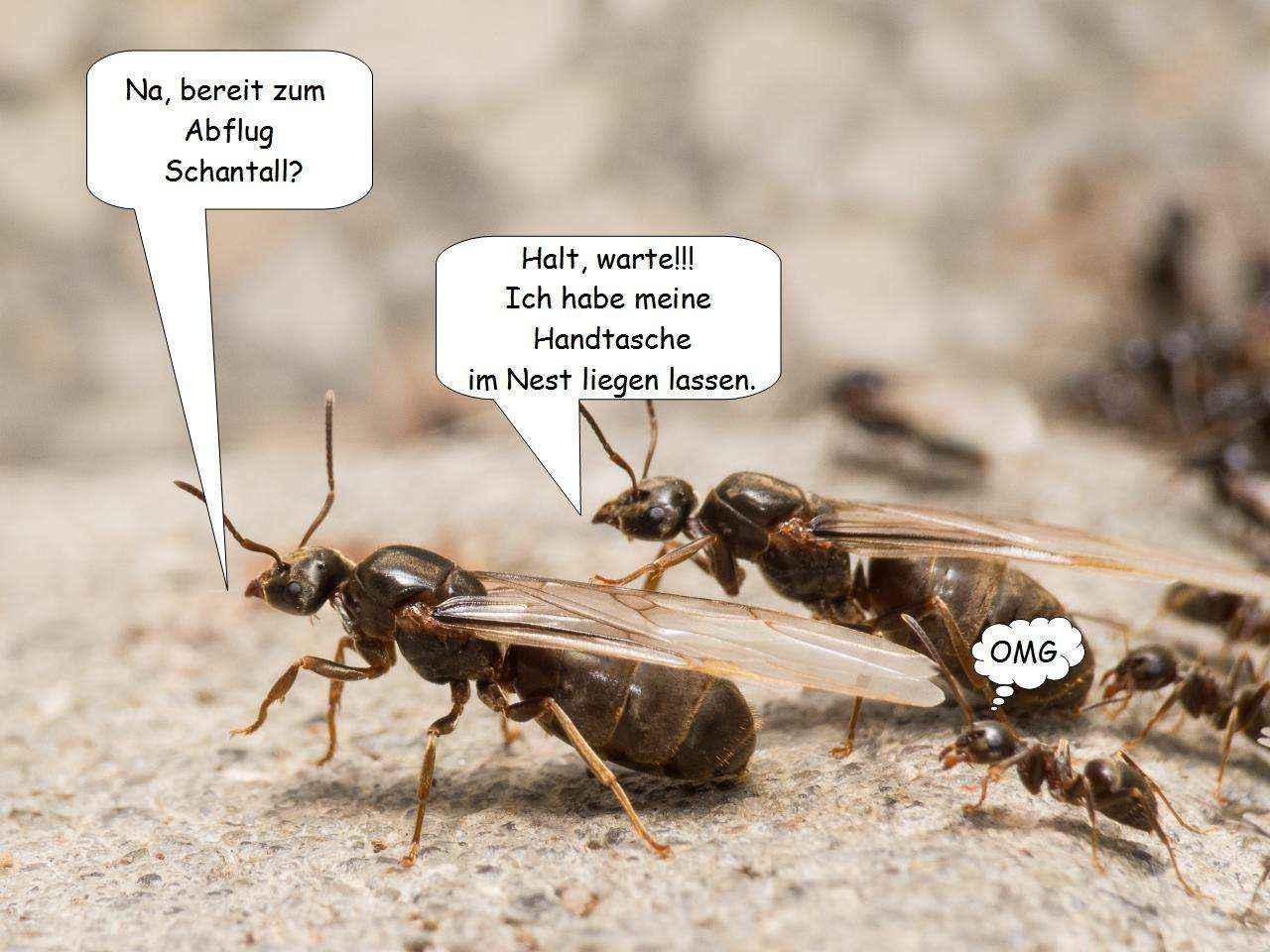 Ameisenköniginnen und ihre Probleme