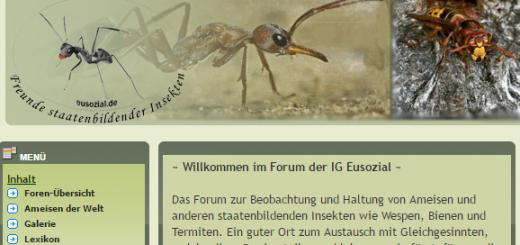 Screenshot der Startseite von eusozial.de