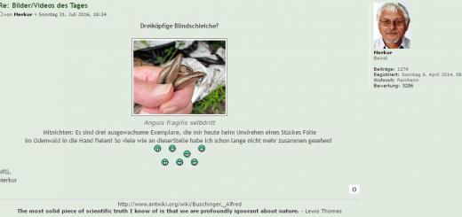 Der heutige Post des Herrn Buschinger im Ameisenportal.
