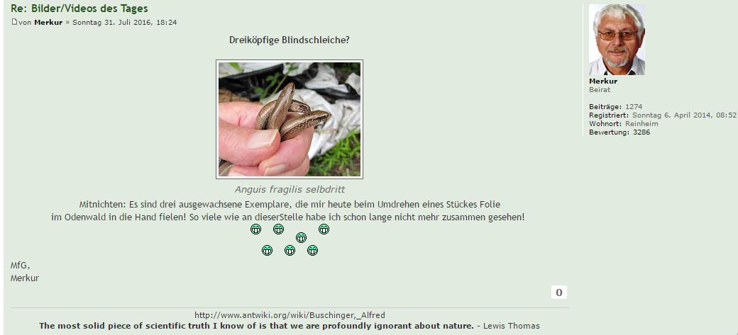 Buschinger fängt Blindschleichen und postet stolz ein Foto seines Fangs