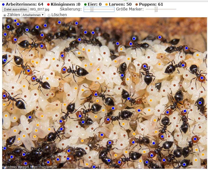 WebApp zum Ameisen zählen