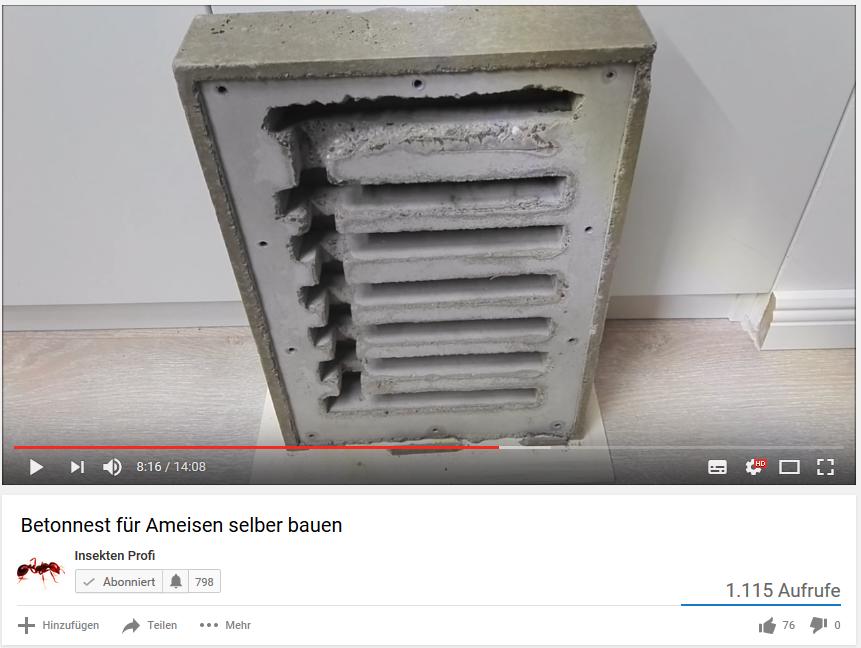 Ameisennest aus Beton bauen