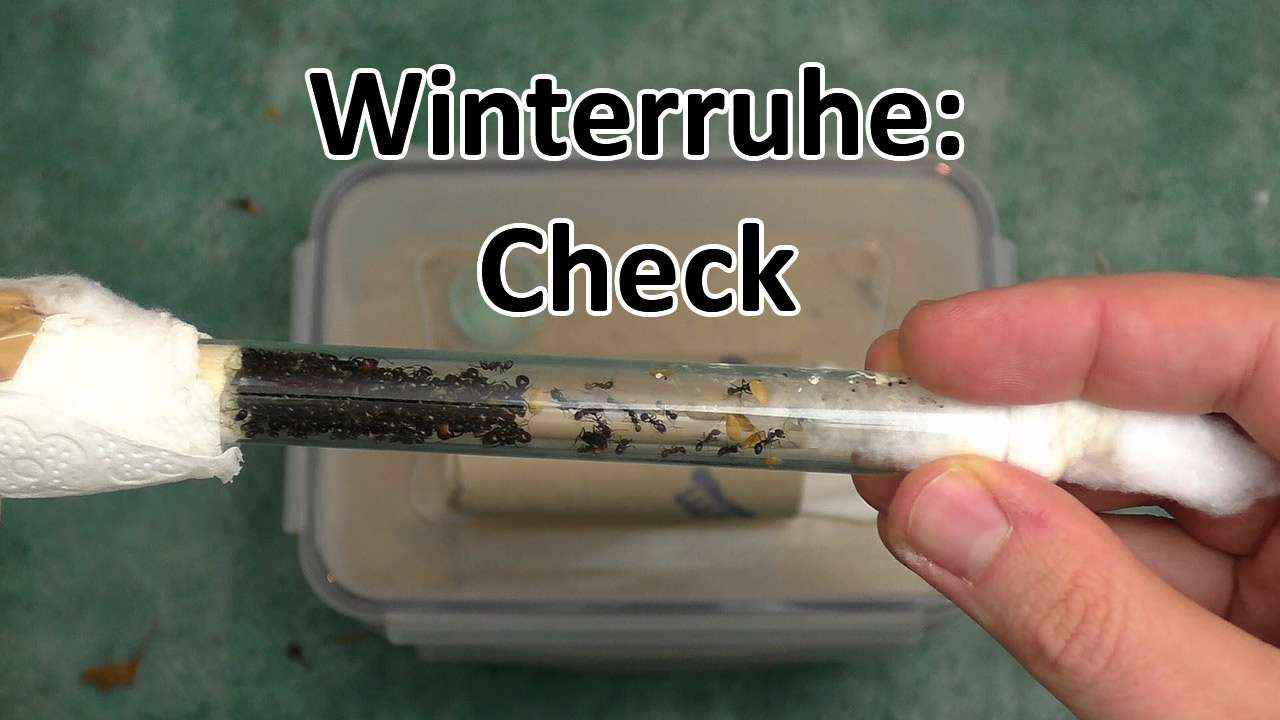 Winterruhe: Check