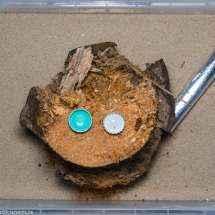 Das neue Formikarium der Camponotus nicobarensis Kolonie. Es bestehta us einer flachen Plastikbox, in der sich ein etwa 10 Jahre alter Baumstumpf befindet.