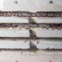 Frontalansicht des Betonnests der Camponotus nicobarensis Kolonie.