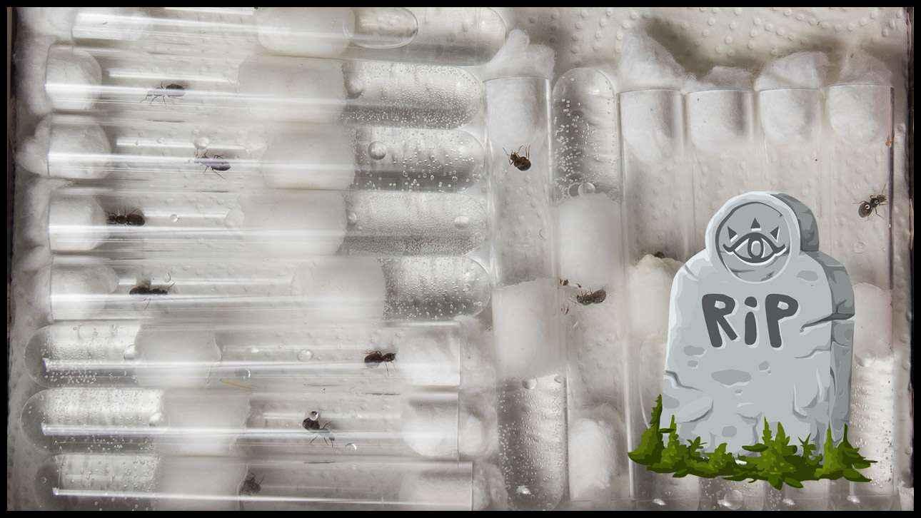 Sterben Lasius niger durch das viele Sammeln aus?