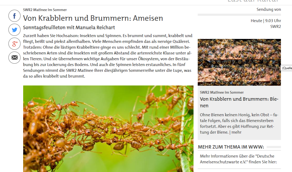 Ameisen als Thema bei SWR2 Matinee