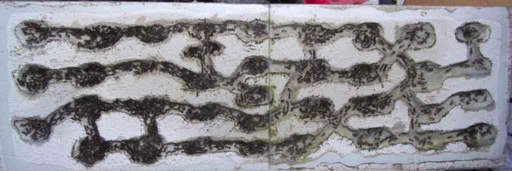 Das Bild zeigt ein Ameisennest, welches aus Ytong gemacht wurde. In den Kammern und Gängen sieht man viele Arbeiterinnen der Art Camponotus nicobarensis