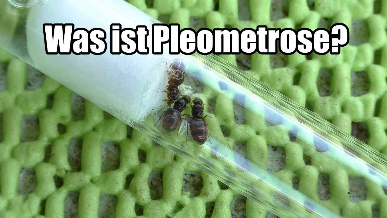 Was ist Pleometrose?