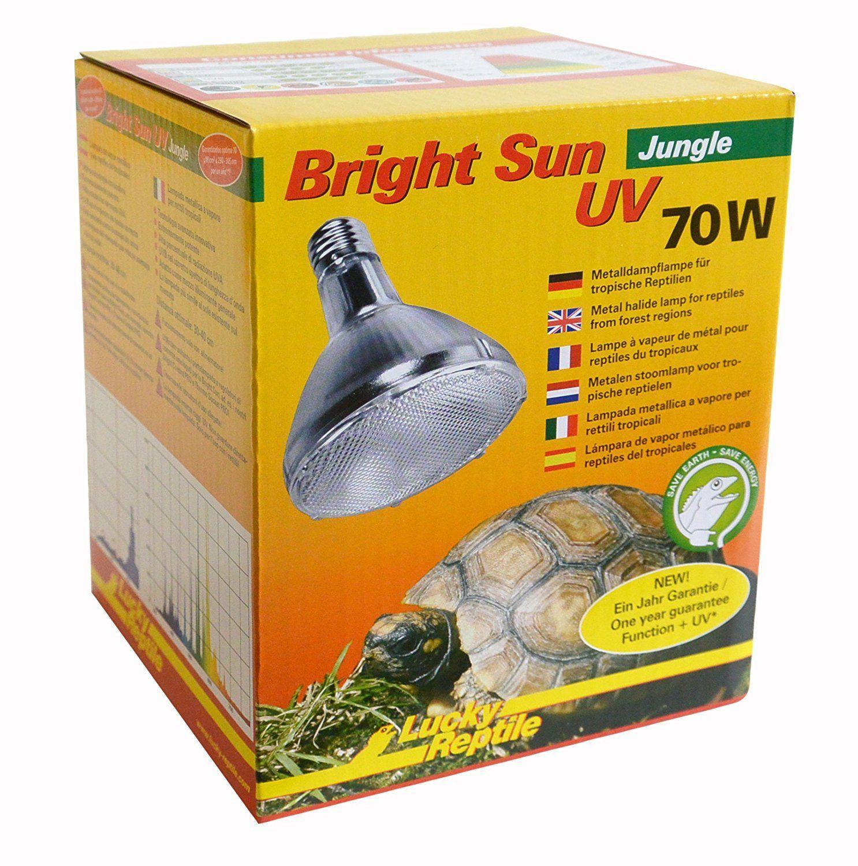 Benötigen Ameisen UV-Lampen?