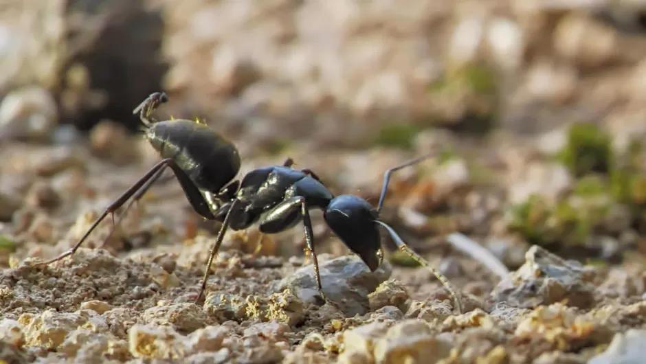 Dokumentation: Im Königreich der Ameisen